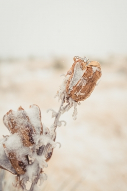 wedding rings in the winter on tall grass